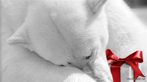 Download Polar Bear Holding Christmas Present Wallpaper