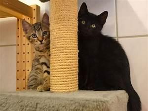 Was Brauchen Katzen : hamburger tierschutzverein von 1841 unsere katzen ~ Lizthompson.info Haus und Dekorationen