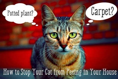 stop  cat  peeing   house pethelpful