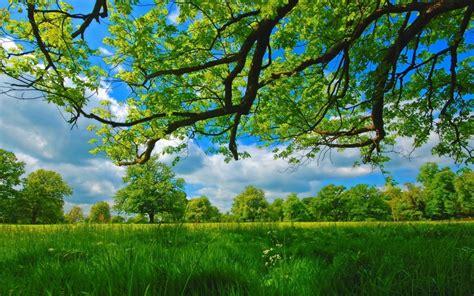 [49+] Nexus Desktop Wallpaper Nature Forests on ...