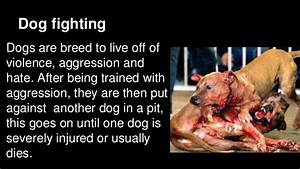 Animal Rights Critical Thinking