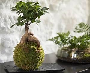 Terrarium Plante Deco : diy v g tal et d co je fabrique mon propre terrarium ~ Dode.kayakingforconservation.com Idées de Décoration