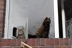 Katzenklappe Für Fenster : katzenklappe einbauen was man dabei beachten muss schnurrinchen ~ Eleganceandgraceweddings.com Haus und Dekorationen