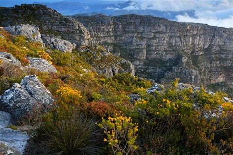 Nature – 2oceansvibe News   South African and ...