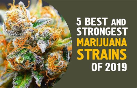 bester cannabis dünger 5 best and strongest marijuana strains of 2019