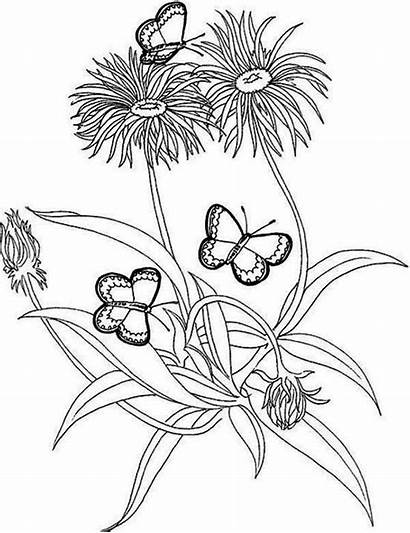 Coloring Rainforest Butterfly Pages Flower Plants Flowers