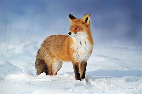 winning picture   wildlife photographer