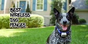the top pet and baby gates compare and review all the With top rated electric dog fence