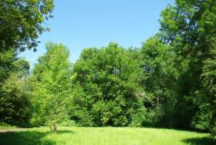 file meadow and trees at noble woods park hillsboro oregon jpg