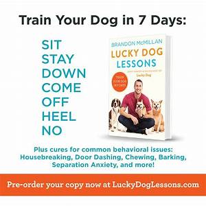 35 best images about Lucky Dog Lessons on Pinterest ...