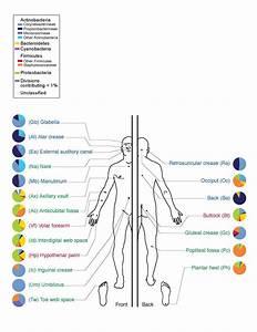 Human microbiota - Wikipedia