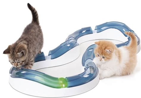 katzenspielzeug die besten  test vergleich katzen