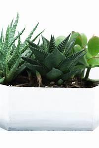 Sukkulenten Für Draußen : upcycling diy ombr mini sukkulenten garten diy balkon garten sukkulenten pflanzen und ~ Watch28wear.com Haus und Dekorationen