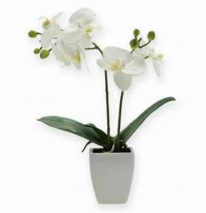 Künstliche Orchideen Im Topf : deko orchidee phalaenopsis mit bertopf 32cm preiswert online kaufen ~ Watch28wear.com Haus und Dekorationen