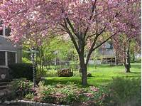 front yard trees Landscape Restoration 555 Treyburn View Alpharetta, GA ...
