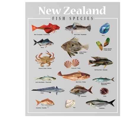 zealand fish species  decal shop nz designer