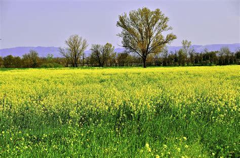immagini prato fiorito prato fiorito foto immagini paesaggi cagna le 4