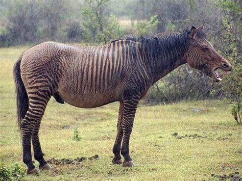 pin   hybrid animals