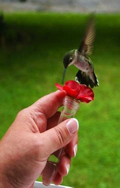 attract hummingbirds    fun ideas