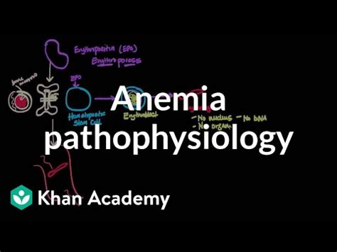 anemia pathophysiology video anemia khan academy