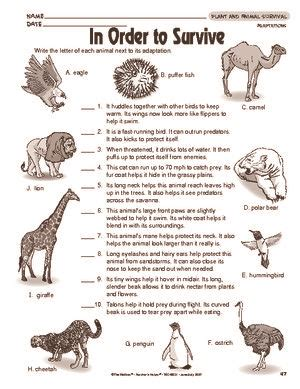 results for animal adaptations worksheet guest the mailbox life science animal