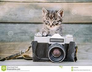 Appareil Photo Vintage : chaton avec l 39 appareil photo de photo de vintage image ~ Farleysfitness.com Idées de Décoration