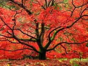 fall treeserviceofnashville