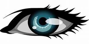 Artistic eye,eyelash vector   Free PSD,Vector,Icons