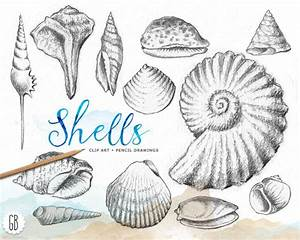 Shells, hand drawn, pencil, vintage inspired, shell