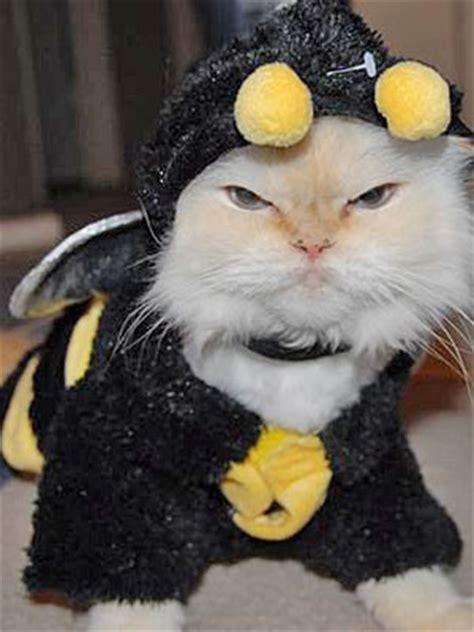 cats  halloween costumes cute  tiny