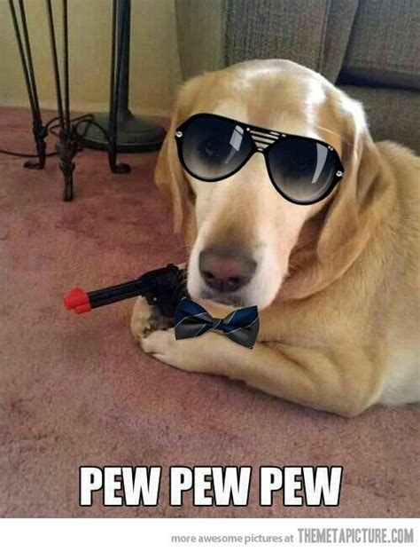 Pew Pew Meme - 12 best images about cymera funny animals on pinterest pew pew fairies and nerd