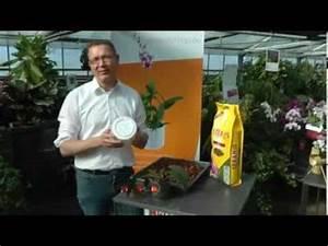 Orchideen Umtopfen Video : orchideen richtig umtopfen mit dem orchitop und seramis ~ Watch28wear.com Haus und Dekorationen