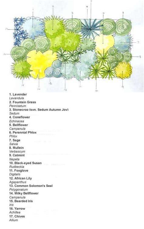 cottage garden planting scheme ready made border cottage garden scheme
