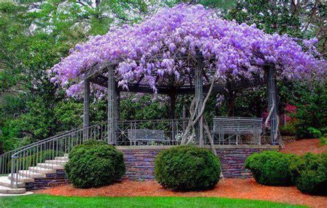 beautiful garden trees gardening whispers of the heart