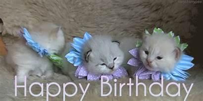 Birthday Happy Flowers Kittens Gifs Wishes Cat