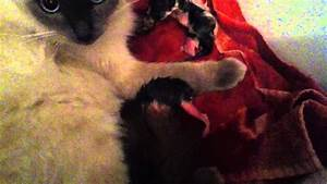 Puppy dog reaction to cat giving birth - YouTube