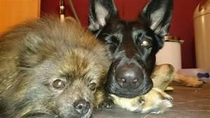 Ich Suche Einen Großen Hund : hundehaltung sollte ich mir einen hund anschaffen ~ Jslefanu.com Haus und Dekorationen