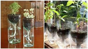 Pflanzen Bewässern Mit Plastikflasche : bew sserungssystem aus einer plastikflasche einfach auf das bild klicken und mehr erfahren ~ Frokenaadalensverden.com Haus und Dekorationen