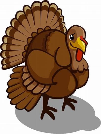 Turkey Clipart November Transparent Thanksgiving Bird Birthday