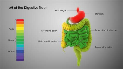 digestive system ph levels scientific animations
