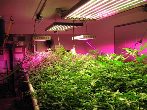 indoor farming led lights how artificial plant lights will help growing your plants