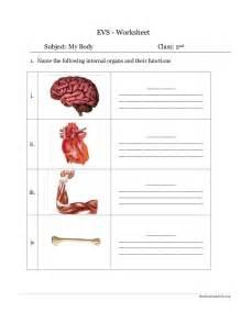 Human Body Worksheets Grade 1