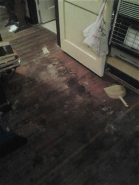 urine on hardwood floors removal removing pet urine stains from hardwood floors thriftyfun