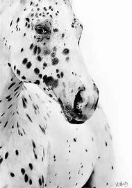 Appaloosa Horse Drawings