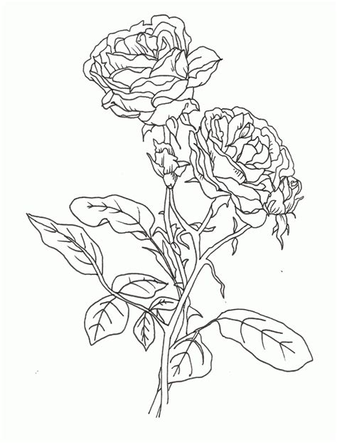 Black and white pattern for coloring book for adults. Printable Rose Pictures - Coloring Home