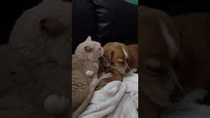 Cat and Dog Love Story - Ask Hikayesi - YouTube