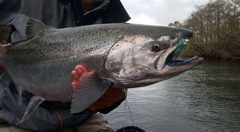 salmon wallpapers uskycom