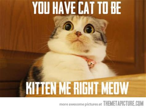 Funny Kitten Meme - to meme or not to meme 4 tips to make them work