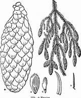 Shrubs Drawing Getdrawings Trees sketch template