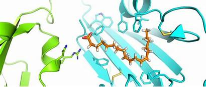 Spike Sars Cov Coronavirus Discovery Pocket Protein